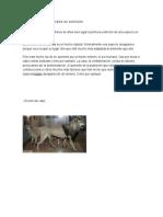 El Origen de Los Animales en Extinción