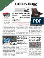 Periódico de osos