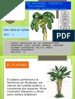 fibras de platano.pptx
