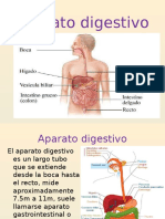 Sistema Digestivo1