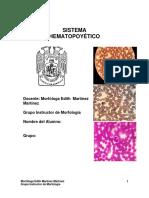 Morfología Del Sistema Hematopoyetico