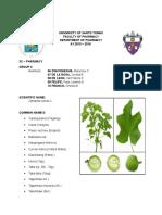 Plant Material of Tubang bakod