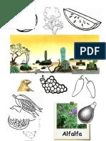Animales y Plantas de La Region