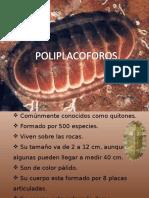 exposición poliplacforos