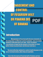 Control Management of Fusarium Wilt