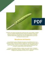 Los Beneficios del LLanten.doc