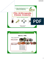 Aula 10 Insecta