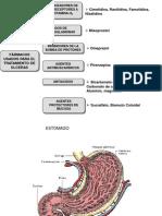 EFMPII-10-Sistemagastrointestia