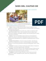 ACTIVIDADES DEL CULTIVO DE LA UVA.docx