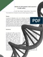 Lab.-7-ADN..docx