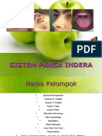 Anatomi Sistem Panca Indra Gudang Makalahm