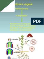 Anatomia Vegetal y descripción