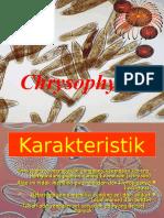 Chrysophyta
