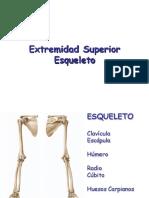 Esqueleto Extremidad Superior