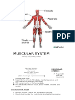 MUSCULAR SYSTEM.docx