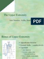 Upper Extremity