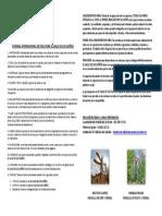 VI BIENAL INTERNACIONAL DE ESCULTURA EL VALLE DE LOS SUEÑOS