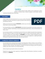 11_labores_noviembre.pdf