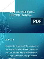 ch 13 4 peripheral nervous system