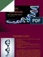 07_Ácidos Nucleicos.ppt