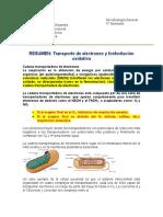 3 RESUMEN_Fosforilación Oxidativa