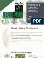 pteridophytaa