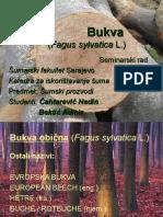 Bukva - Seminarski Rad