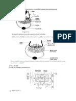 Tuto Lymphatic System