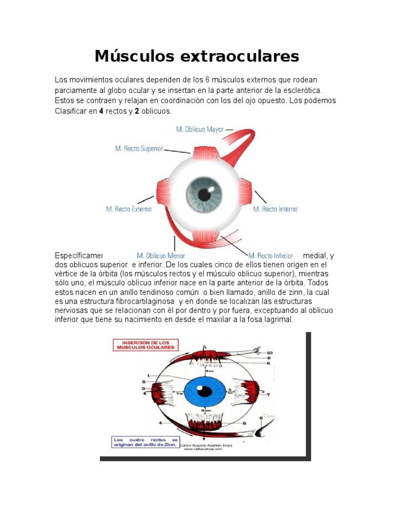 musculo recto interno del ojo