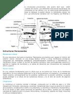 Estructura Bacterias