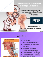 Anatomia general de Faringe y Laringe Otorrino