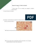 Constituição Do Sangue e o Sistema Circulatório Teste CN 9º Ano