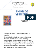 1 Columna Vertebral anatomía descriptiva