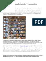 Franquicias De Tienda De Animales Y Mascotas Info Franquicias