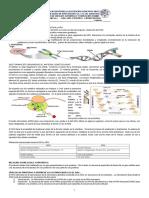 Guía Biología Noveno Primer Periodo