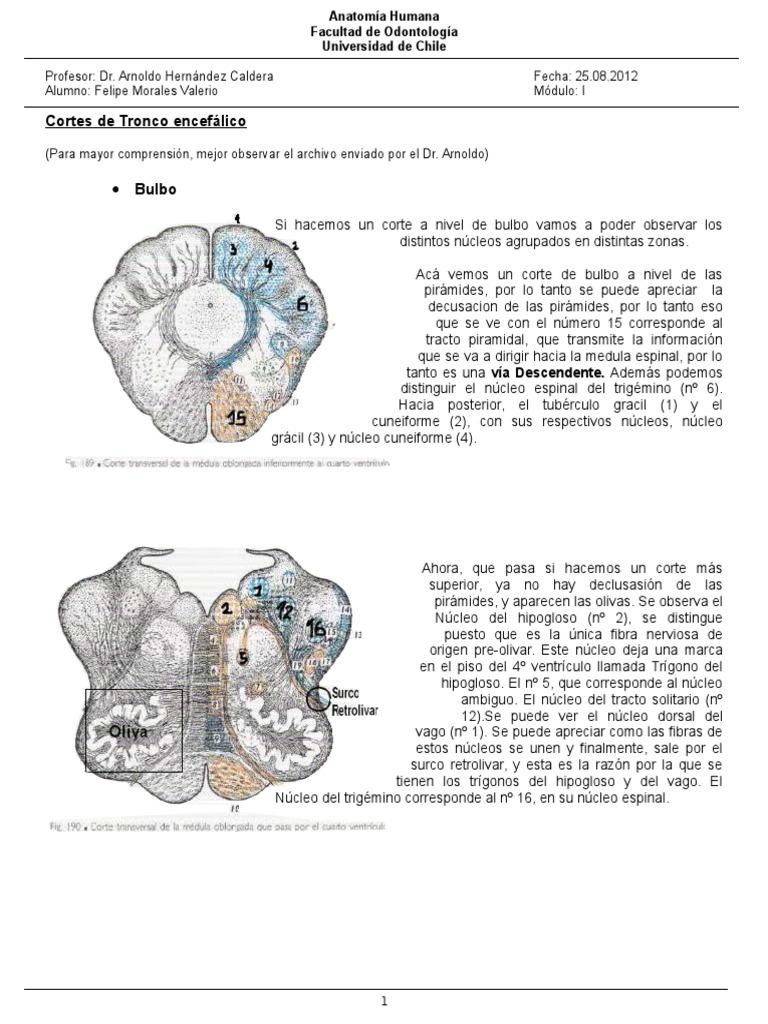 Neuroanatomía Trigeminal