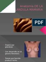 Anatomia Fisiologia y Lactancia de La Glandula Mamaria