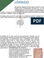 Presentación Biología Esófago