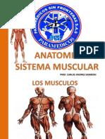Sistema Muscular Psf