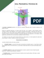 La Posición Anatómica