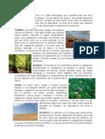 Polo Tundra Bosque Selva