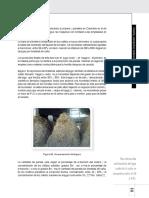 Etapas-de-extraccion-de-jugo (1).pdf