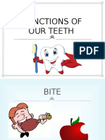 functions of our teeth