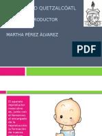 Aparato Reproductor masculino.pptx