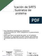 Identificación de SIRT5 en Sustratos de Proteína