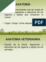 Introduccion a La Anatomia TERMINOLOGÍA ANATÓMICA