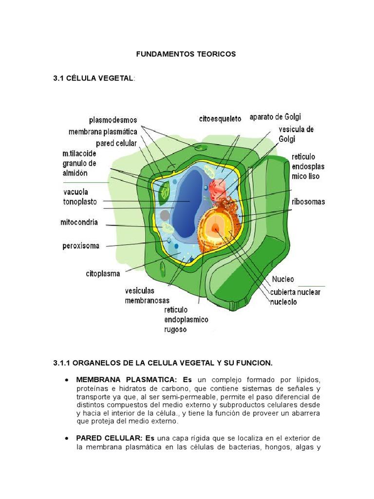 Célula Vegetal y Animal.