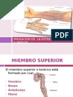 Anatomia Del Extremi
