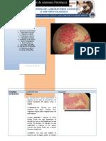 Atlas de Placas de Anatomía Patológica
