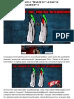 "Ecco il nuovo muscolo ""Tensor of the Vastus Intermedius"" nel quadricipite   Ticinosthetics Blog"